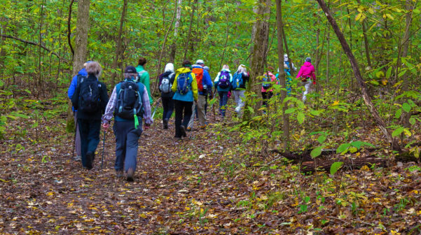 Large group of hikers from behind, in a hardwood forest