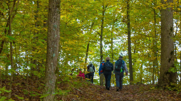 View behind a group of hikers walking in a hardwood forest