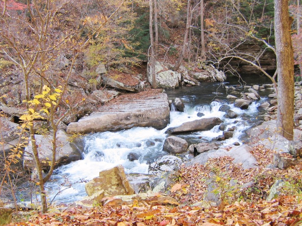 Rocky stream with small rapids in a forest