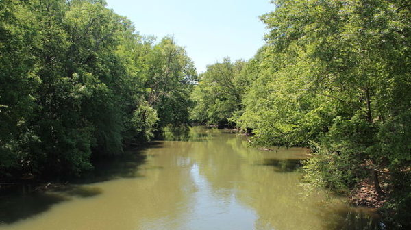 River with green water solidly lined by green trees