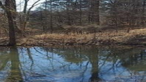 pond water in foreground with fall leaves and trees on the shore